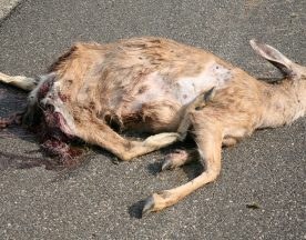 carcass-removal-header