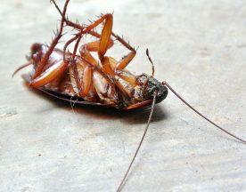 pest-control-header
